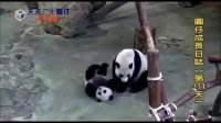 20140513 D311_ 圓仔成長日記 The Giant Panda Yuan-Zai (480p)