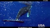 夏威夷故事:茂宜岛观鲸 / Stories of Hawaii: Whale