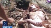 在墨西哥,发现死的美人鱼。