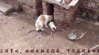 【真情至上】这对狗母子让人惭愧万分