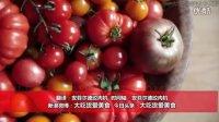 【大吃货爱美食】世界最受欢迎的水果之一!Jamie带你走进神奇的番茄花园~ 150909