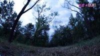 梦见迷失在森林中是什么意思?