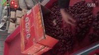 泰信牌轨道式多功能选果机-若羌灰枣厂区试验视频-新疆红枣