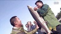 笑哥擒获50斤巨型鲟鱼