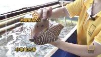 芒果看天下 2016 台海漂流记(四) 发现福建超级大海螺 超便宜 01