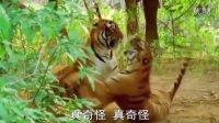 儿童歌曲两只老虎