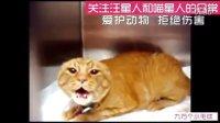 🐾不叫两声真拿我当病猫呢〖猫喵星人狗汪星人动物搞笑视频集锦】20-10