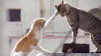 搞笑的猫咪打架,笑哭了,有木有,猫咪搞笑视频