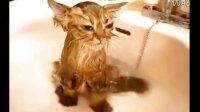 给猫咪洗澡的方法,爱猫人必学,猫咪搞笑视频