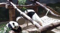 Mei Lun and Mei Huan Adorable Panda Zoo Atlanta MAY2016