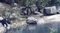 """【嗅君葩闻】惊奇!黑猩猩用树枝做""""鱼竿""""采食水藻 第六季105"""