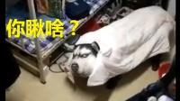 """玛德智障!宿舍汪举办""""狗王争霸赛""""亮瞎眼!【搞笑恶搞美女逗逼视频】"""