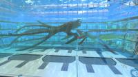 【爱尼玛热游】6美丽水世界 电池充电器 动力电池充电器 独眼巨人号发动机位置  最新测试版汉化