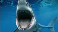 【逍遥小枫】飞天大白鲨!海底霸王竟然惨死空中?? | 海底大猎杀(Fish Sim)#31