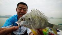 第46集 初入广东玩法新奇 手竿也能钓海鱼