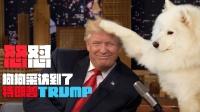 特朗普推特应邀做客中国萌宠节目,受访哭笑不得!