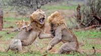 雄狮争霸大战