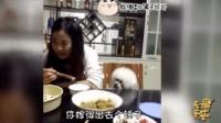 当这些动物讲起了重庆话... 哈哈哈太搞笑了