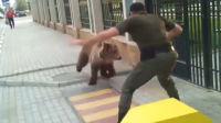 狗熊在街上乱窜欲称霸 没想到竟被战斗民族一脚踹晕
