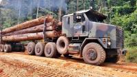 货车山林里拉木材, 穿越危险道路百米泥潭, 真是勇敢的司机!