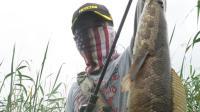 三耳鱼的黑鱼世界  2017夏季雷强之二十一