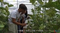 在中国天气最好的城市来一次果园采摘 引进的哈密瓜 味道竟超越原产地 12