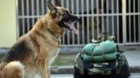 训狗视频在线观看_训狗口令表_有关养狗训狗的书籍