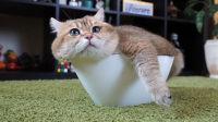 爱臭美的喵星人, 猫咪搞笑视频集锦