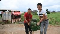 农村合伙人, 小伙一起做西瓜生意, 他们能到赚钱吗?