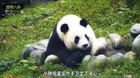 谁没减过肥啊, 熊猫怎么了? 吃你家大米了吗?