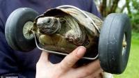 乌龟跑的慢是误传, 不信放跑步机上试试