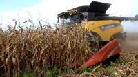 荷兰收割机挂上15行的凯斯割台, 这样收玉米效率真是高