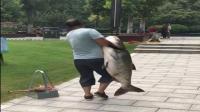 公园湖里竟然有这么多大鲢鱼, 目测一下钓上来的这条能有多重