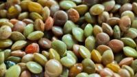 糖尿病患者吃什么蔬菜可以有降血糖的效果?