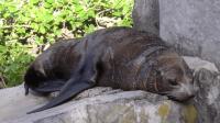 新西兰特辑: 无边界动物园