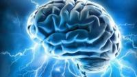 肌肉多少和力量大小有关, 那么聪不聪明和大脑大小有关吗?