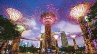 新加坡超级树 一座16层楼高的垂直花园 作用相当于一个生态系统 81