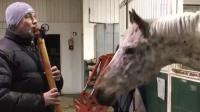 喜欢听长笛的马, 好可爱