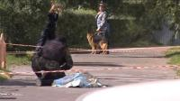 俄罗斯发生持刀袭击事件 致七人受伤