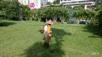 实拍酷暑天, 园林工人在草坪辛勤除草的视频