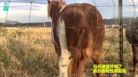 动物界的老实人——马 搞笑起来反而意外萌