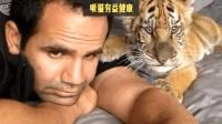 铲屎官与猫咪的互动, 如果换成老虎或狮子, 是种什么样的体验?