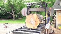 一颗巨树切成木板, 半天下来价值翻好几倍