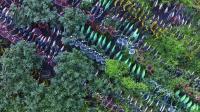 """上海共享单车坟墓堆积如山 """"坟头草""""一茬又一茬"""