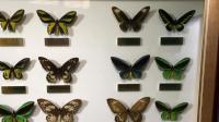 生活玩乐第21期: 上海昆虫博物馆