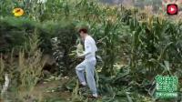 向往的生活 陈赫在地里摘玉米 没想到陈赫怎么能说!