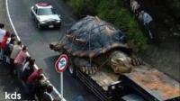 10种世界上最大的动物, 彻底颠覆你的三观
