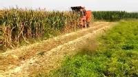哈克玉米收割机迎来了今年第一次收割, 速度快效果佳, 不亏是新车