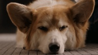影评: 一条狗的使命——狗的四世轮回 感受很多人不同的人生