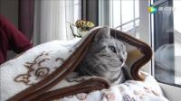 猫咪睡觉喜欢用被子盖着头, 主人看着不舒服就用假的卷发给它带